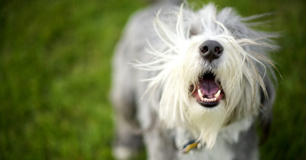 Excessive Barking
