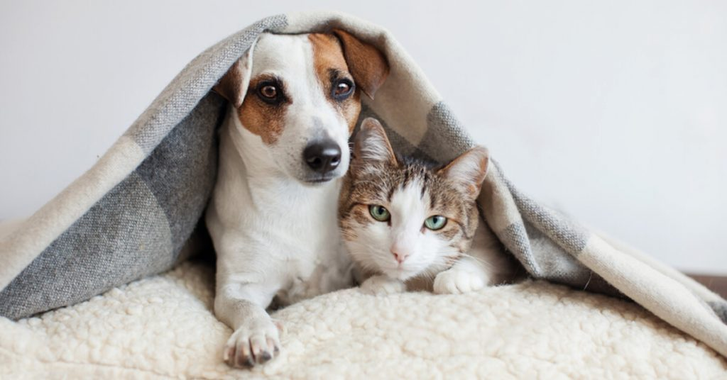 dog and cat under blanket